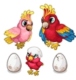 Parrots family and their nestling Tropical birds vector image vector image