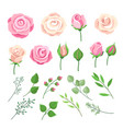 rose elements pink and white roses flowers with vector image