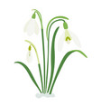 spring snowdrops three spring flowers a bouquet vector image vector image
