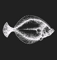 hand drawn flounder fish on chalk board vector image