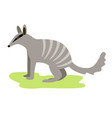 australian animal nambat on white background icon vector image vector image