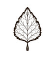autumn linden leaf coloring book for adults vector image vector image