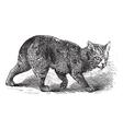 Manx vintage engraving vector image vector image