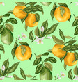 seamless pattern summer citrus fruit branches of vector image vector image
