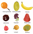 set of different fruits vector image vector image