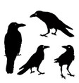 silhouette a crows in different positions vector image vector image