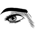 detailed female eyes with long eyelashes vector image vector image