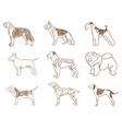 dogs set vector image vector image