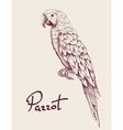 Parrot isolated on white background vector image vector image