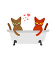 cat lovers in bath lover joint bathing pet vector image vector image