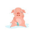 cute sad little pig crying funny piglet cartoon vector image