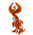phoenix fier bird vector image vector image