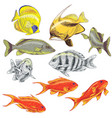 colored reef fishes set vector image vector image