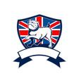 Proud english bulldog british flag shield vector image vector image