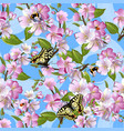spring seamless pattern with flowers of apple vector image vector image
