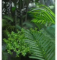 background jungle of tropical plants vector image vector image