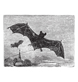Common Bat vintage engraving vector image vector image