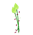 Fresh Lotus Flower on A White Background vector image vector image