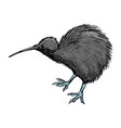 kiwi bird symbol of new zealand vector image vector image