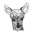 little roe deer cub vector image vector image