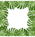 philodendron monstera leaf border vector image