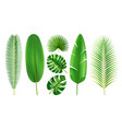 tropical leaves set in different position 3d style vector image