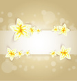 spring flowers card vector image