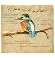 Hand painted Bird Kingfisher vector image vector image