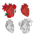 human heart isolated on vector image vector image