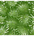 philodendron monstera leaf seamless isolated on vector image
