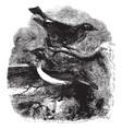 wheatear vintage vector image vector image