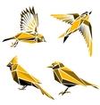 Set of four triangle birds symbols vector image