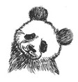 panda symbol of china vector image
