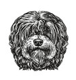 hand drawn portrait lapdog dog pet animal vector image