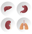 human internal organs flat icons set of vector image