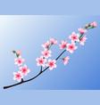 peach blossom branch vector image