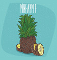 isolated fruit of ripe ananas with slices vector image
