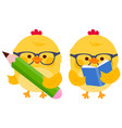 cute chick students reading and writing vector image vector image