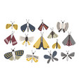 set of dark colored doodle moths isolated on white vector image
