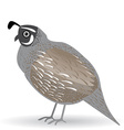 Funny quail on a white background vector image vector image