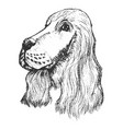 portrait of spaniel vector image