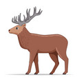 red deer animal standing on a white background vector image