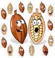 cocoa bean vector image vector image