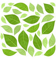 green leaves pattern background vector image