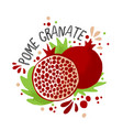 hand draw colored pomegranate vector image vector image
