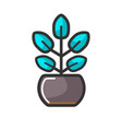 indoor plant in pot with unusual turquoise leaves vector image vector image
