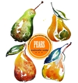 Set of different ripe pears watercolor sketch vector image vector image