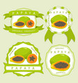the theme papaya vector image vector image
