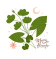 branch with leaves lotus flower and moon crescent vector image vector image
