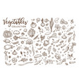 healthy organic vegetables collection vector image
